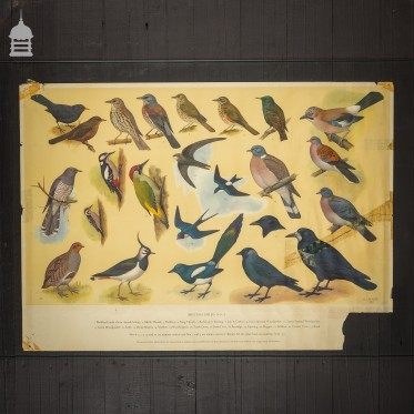 British Birds Poster Printed by The Royal Society for the Protection of Birds