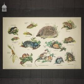 Vintage Wildlife Mammals Poster