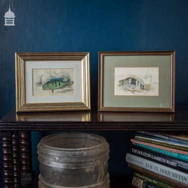 Pair of Early 19th C Victorian Hand Coloured Engravings of Fish Dated 1836 in Later Frames