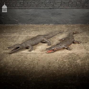 Pair of 19th C Taxidermy Crocodiles