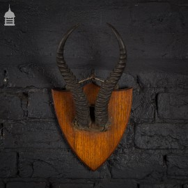 Pair of Horns Mounted on Oak Plaque